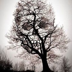 Skulls and trees.  #paranormalwest #paranormal #skull #trees #halloween #october #death #skeleton #spooky #creepy #adventures