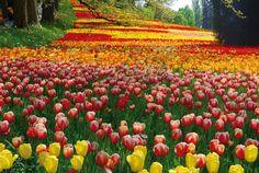 ドイツ 島 ガーデン - Google 検索