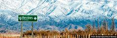 The Vines of Mendoza Andes Mountains, Wines, Acre, Evans, Vineyard, Travel, Bucket List Travel, Viajes, Dreams
