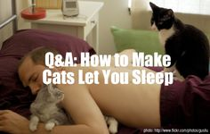 Q&A: How to Make Your Cats Let You Sleep