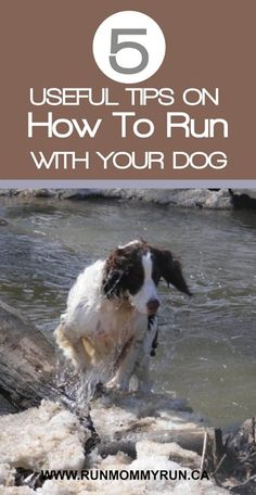 Want to start running with your dog? Here are 5 great tips to get you started!