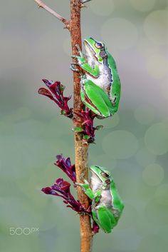 ~~Trekking club  :)   frogs climbing   by Mustafa Öztürk~~