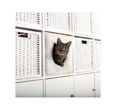Kattenbox voor Ikea Expedit/Kallax kasten