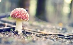 Fall Autumn Day, Hello Autumn, Fall, Mushroom Wallpaper, Timeless Photography, Mushroom Pictures, Snap Out Of It, Picture Collection, Autumn Inspiration