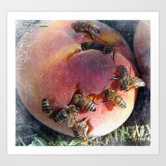 A Peach For the Honey Bees Art Print by Cassie Peters - $14.00