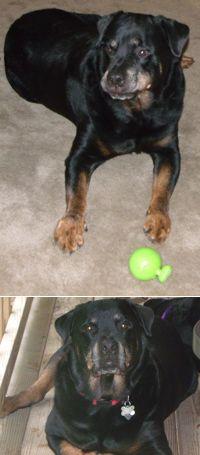 titus the dog
