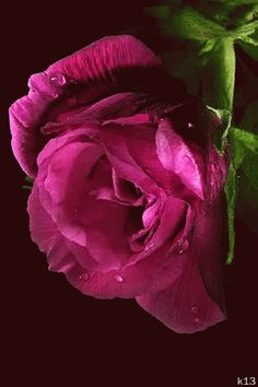 The perfect Pink Rose Animated GIF for your conversation. Discover and Share the best GIFs on Tenor. Rose Images, Rose Pictures, Flower Images, Beautiful Flowers Wallpapers, Beautiful Gif, Beautiful Roses, Roses Gif, Flowers Gif, Flowers For Everyone