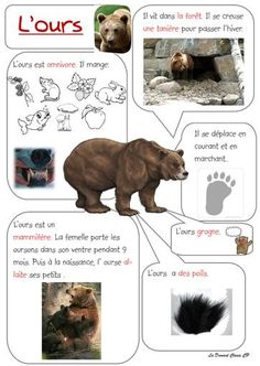 Faire un exposé au CP - - Kid Science, Montessori, Make A Presentation, French Education, French Expressions, Animal Habitats, Teaching French, Blog Writing, Forest Animals