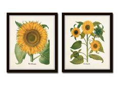 Antique Sunflower Print Set No. 4 Botanical by BelleMaisonArt