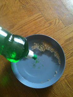 Experiment: Diskmedel och oregano    Du behöver:  En skål Vatten Diskmedel Oregano  Så här gör du:  1. Häll i vatten i glasskålen, kvittar hur mycket.   2. Strö ut mycket kryddan centralt i vattnet.   3. Häll en droppe diskmedel i mitten.    Vad händer med oreganon?
