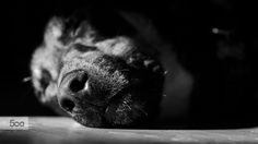 Nose by Laurens Kaldeway on 500px