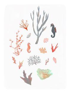 seaweed and sea life Alice Ferrow