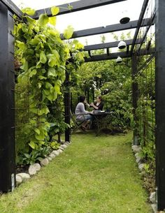 Urban Garden Design 40 Awesome Wall Climbing Plants Ideas For Your Backyard Design Outdoor Pergola, Backyard Pergola, Pergola Plans, Backyard Landscaping, Pergola Kits, Pergola Carport, Backyard Ideas, Pergola Lighting, Pergola Screens