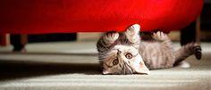 www.clouds.com.tr hazır web sitesi ile isteyen herkes kolayca web sitesini açıyor. Buda şirin dostlarımızın tedavileri ile uğraşan veterinerin sitesi: http://www.vetarenaveteriner.com #hazırwebsitesi