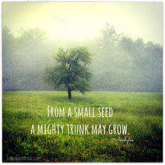 From a small seed a mighty trunk may grow. ~ Aeschylus creativity quote