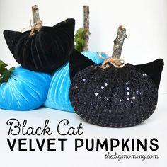 Make Black Cat Velvet Pumpkins (+ 8 More DIY Halloween Ideas!)   The DIY Mommy