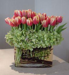Tulips and Hydrangeas