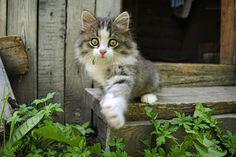 Photograph Привет! Я Сонька. by Sergey Kuznetsov on 500px