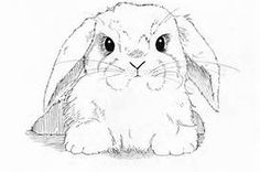 a cute chubby drawling of a bunny