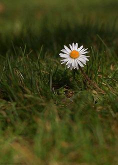 Frühling, gif'd