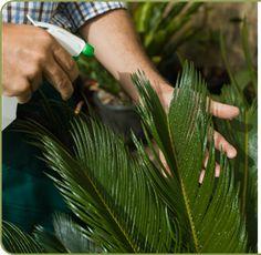 Cómo hacer 10 Fungicidas y pesticidas naturales y caseros para el jardín.  http://www.unavidalucida.com.ar/2012/09/10-fungicidas-y-pesticidas-naturales-y.html