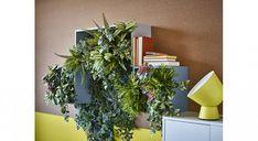 Houseplants: a basic guide to growing Potted Plants, Indoor Plants, Les Elements, Ikea, Office Shelf, Deco, Houseplants, Shelves, Home