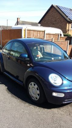 Harry my new bug