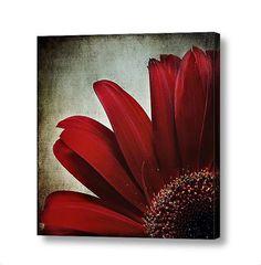 Dark Red Crimson Flower Floral Petals Mum by PaintedTulipStudio