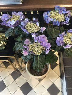 Hermosas plantas !!!!