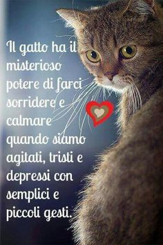 Il potere di questi stupendi felini in miniatura. Nature Animals, Animals And Pets, Cute Animals, I Love Cats, Cute Cats, Celebrities With Cats, Mr Cat, Simons Cat, Feelings And Emotions