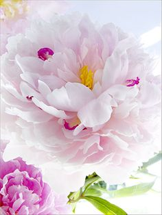 Perfect Bloom by judy stalus, via Flickr