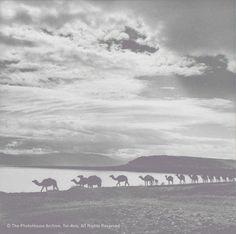 Rudi Weissenstein, Caravan of camels, Dead Sea, 1959, °CLAIR Galerie