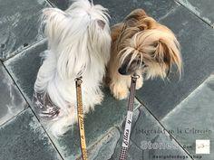 Chic fashion for pets Sams, Cousins, Husband, Chic, Hair Styles, Beauty, Fashion, Fur, Tejidos