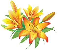 Yellow Lilies Flowers Decoration PNG Clipart Image