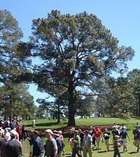 Augusta National Golf Club - Wikipedia, the free encyclopedia