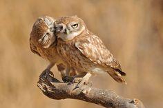 owl kisses!!!