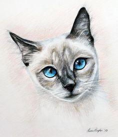 Blue Eyes- color pencil drawing ©Lena Auxier
