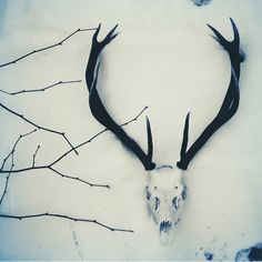 white with muted blues and antlers. #antlers #twigs