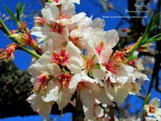 Almendros en Flor - Quinta de los Molinos en Madrid IV by Mario Silva on 500px