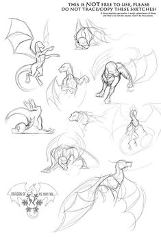 Animal Sketches, Art Drawings Sketches, Animal Drawings, Art Illustrations, Drawing Techniques, Drawing Tips, Drawing Ideas, Dragon Anatomy, Dragon Poses