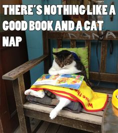 There's nothing like a good book and a cat nap. To brighten your day with more #CutiesNFuzzies, go to http://cutiesnfuzzies.com