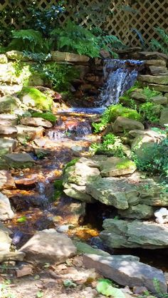 Here's a Natural mossy Waterfall from a few years back. It fits nicely in this secluded back yard! Koi Ponds, Water Gardens, Backyard, Patio, Water Features, Waterfalls, Landscape, Natural, Outdoor Decor
