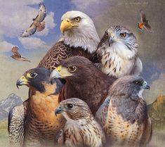 Birds of Prey Art | Wild Wings. Description from pinterest.com. I searched for this on bing.com/images