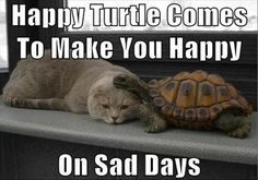 I wish the happy turtle would visit me sometimes. ;)