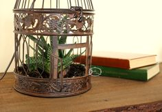 Brown living cage lamp with Aloe vera by Eagle Decor. Eagle Decor is a hungarian designer who loves the handmade, eco friendly products and  plants!