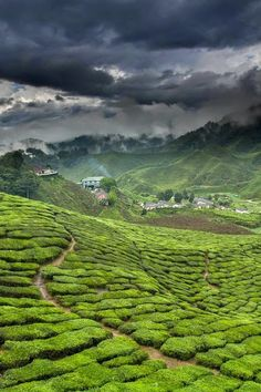 My happy place in India- the tea plantation village of Munnar, Kerala.    I want to go back there!