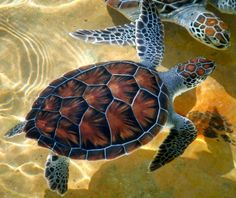 Sea Turtles jigsaw puzzle in Animals puzzles on TheJigsawPuzzles.com