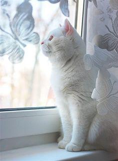 zantraya257:    via photos.lifeisphoto.ru