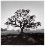 Ansel Adams-  the man that first sparked my interest in photography