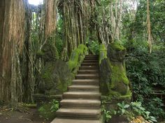 Travel with Travelon Bags! Stairs by the koi pool of Monkey Forest, Ubud, Bali, Indonesia (Personally not interested in going into the temple, but these stairs look so cool! Ubud Bali, Bali Lombok, Ubud Indonesia, Oh The Places You'll Go, Places To Travel, Beautiful World, Beautiful Places, Voyage Bali, Monkey Forest